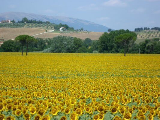 Self guided cycling Tour Umbria
