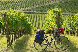 Road bike rentals Arezzo