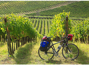 Road bike rentals Arezzo - E Bike Hire