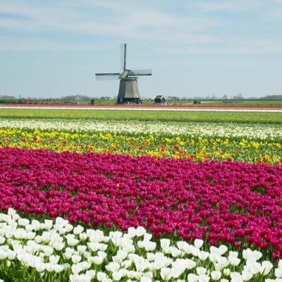 Road Cycling Holland